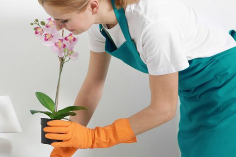 Cleanliness: The Powerful Psychology Behind It